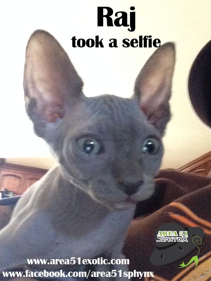 raj-took-a-selfie